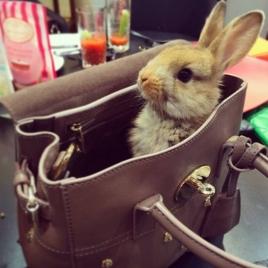 A coelha de Cara Delevingne é mais viajada que muita gente. A top costuma levá-la para sessões de fotos e desfiles ao redor do mundo Foto: Instagram.com/CecilDelevingne