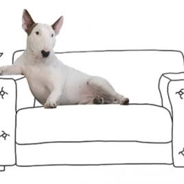 Com nome de grife, o Bull Terrier começou a fazer sucesso por ser protagonista das ilustrações feitas por seu dono, o brasileiro Rafael Mantesso. As fotos chegaram até a marca, que fez uma coleção cápsula com as imagens do cachorro Foto: Instagram.com/ RafaelMantesso