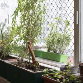 Marina Person tem hortinha em casa (Foto: Camila Guerreiro)